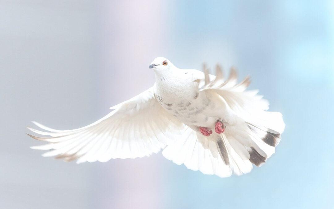 Liberté, liberté chérie !